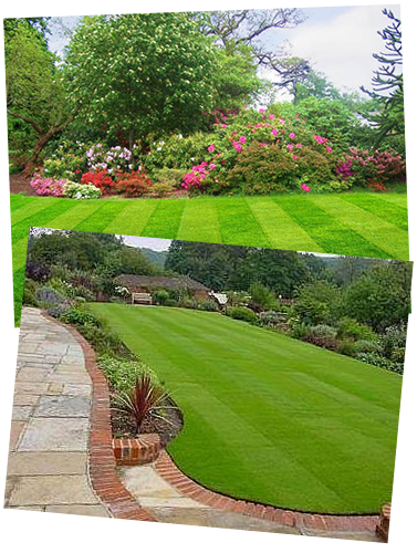 Contact Beautiful Lawns Liverpool